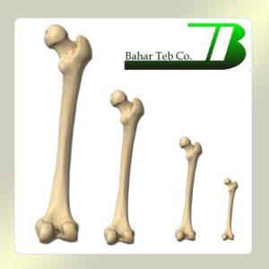 استخوان فمور